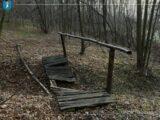 rewitalizacja-lasu-falkowskiego
